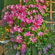 Stock Photo: Flowers pergola