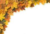 Quadro de outono 04 — Fotografia Stock