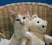 Cat with teddy bear — Stock Photo