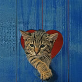 Cat in heart hole — Stock Photo