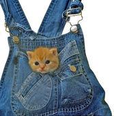 Cat82 — Foto Stock