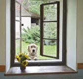 Dog in window — Stock Photo