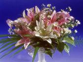 Fiori in vaso — Foto Stock