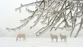 Horses in winter — Stock Photo