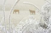 Horses in winter 2 — Stock Photo