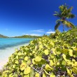 Beef Island Beach - Virgin Islands — Stock Photo