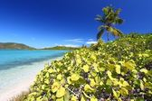 Beef Island Beach - Virgin Islands — Stock Photo
