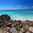 ������, ������: Rocky coastline of Barbados
