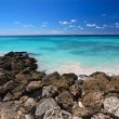 Постер, плакат: Rocky coastline of Barbados