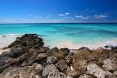 Rocky coastline of Barbados — Stock Photo