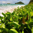 Anse de Sables Beach - Saint Lucia - Stock Photo