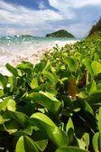 Anse de Sables Beach - Saint Lucia — Stock Photo