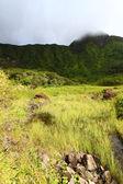 Mount Liamuiga - Saint Kitts — Stock Photo