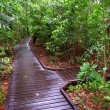 Stock Photo: Green Island National Park - Australia