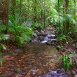 Постер, плакат: Daintree Rainforest Queensland Australia