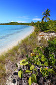 Beach in British Virgin Islands — Stock Photo