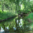 Pretty creek scene in Illinois — Stock Photo #3789624