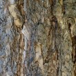 Texture, pine bark — Stock Photo