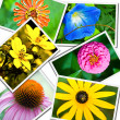 Colorful Flower Collage - Stock Photo