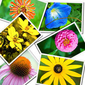 Colorful Flower Collage — Stock Photo