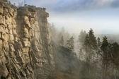 Pedra bela em uma floresta de manhã — Foto Stock