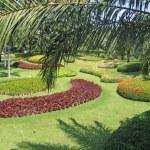 Thailand, Pattaya. A botanical garden of Nong Nuch. — Stock Photo