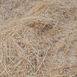 Stock Photo: Field after assemblage of ears of barley in Moscow Region.