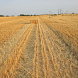Field with collected ears of barley, Moscow Region. — Stock Photo #3788233