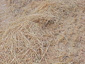 Field after assemblage of ears of barley in Moscow Region. — Stock Photo