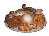 Grzyby jadalne różnego rodzaju na talerzu, to na białym tle — Zdjęcie stockowe