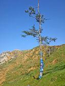 Baikal, isla olkhon. cintas hadak en los árboles, rusia — Foto de Stock