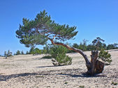 バイカル湖、ロシア島モンゴルへの木 — ストック写真