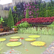 Stock Photo: Small pond with small fishes in a garden of orchids, Pattaya, Thailand