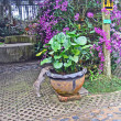 Стоковое фото: Water exotic plants in a garden of orchids, Pattaya, Thailand