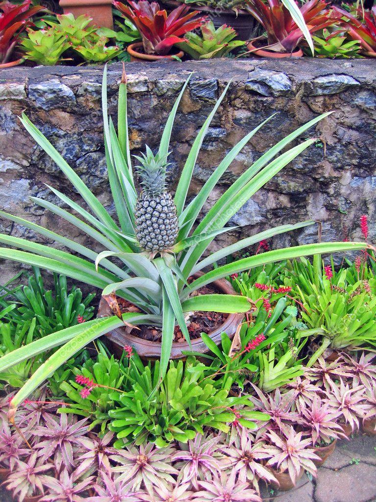 flores tropicais jardim:Baixar – Flores tropicais raras e plantas em um jardim de orquídeas