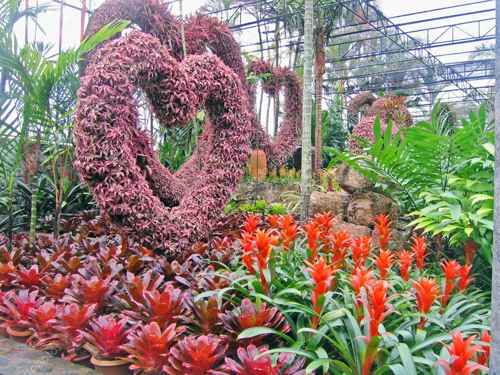 Flores tropicais raras e plantas em um jardim de orquídeas — Imagem