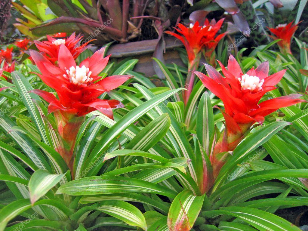 Rares fleurs tropicales et plantes dans un jardin d 39 orchid es photographie belayamedvedica for Fleurs et plantes