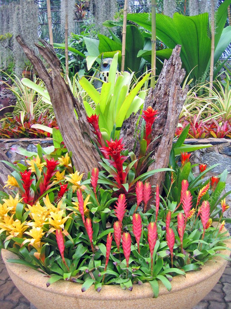 Flores tropicais raras e plantas em um jardim de orqu?deas ...