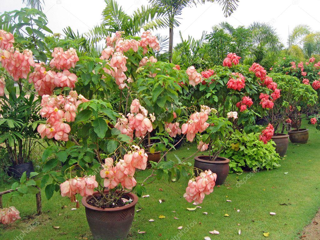 flores tropicais jardim : flores tropicais jardim:Flores tropicais raras e plantas em um jardim de orquídeas