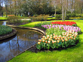 Haarlem. Flowers Tulips on the bank of lake in a botanical garden — Stock Photo