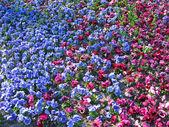 The Netherlands, Haarlem. Flowers in a botanical garden — Stock Photo