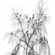 Stock Photo: Flight of birds on crone of birch in winter