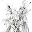 Stock Photo: Flight of birds flies from crone of birch in winter