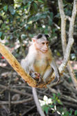 Small baby monkey on tree branch — Stock Photo