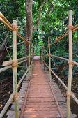 Indiana Johns's style hanging bridge — Stock Photo