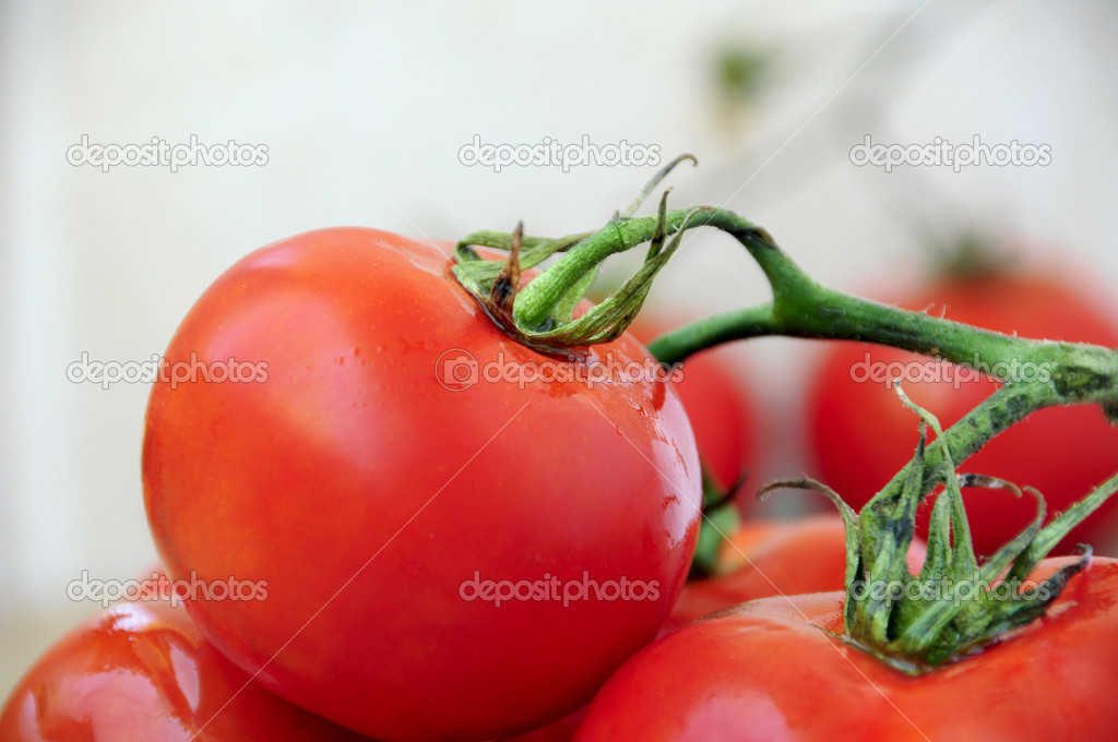 Close up of some fresh red tomatoes  Stock Photo #3519497
