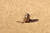 Gladiator helmet — Stock Photo