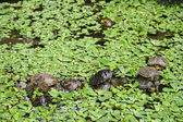 Turtles — Stock fotografie
