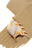 Concha na areia — Foto Stock