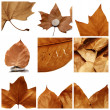 Royalty-Free Stock Photo: Autumn leaves collage